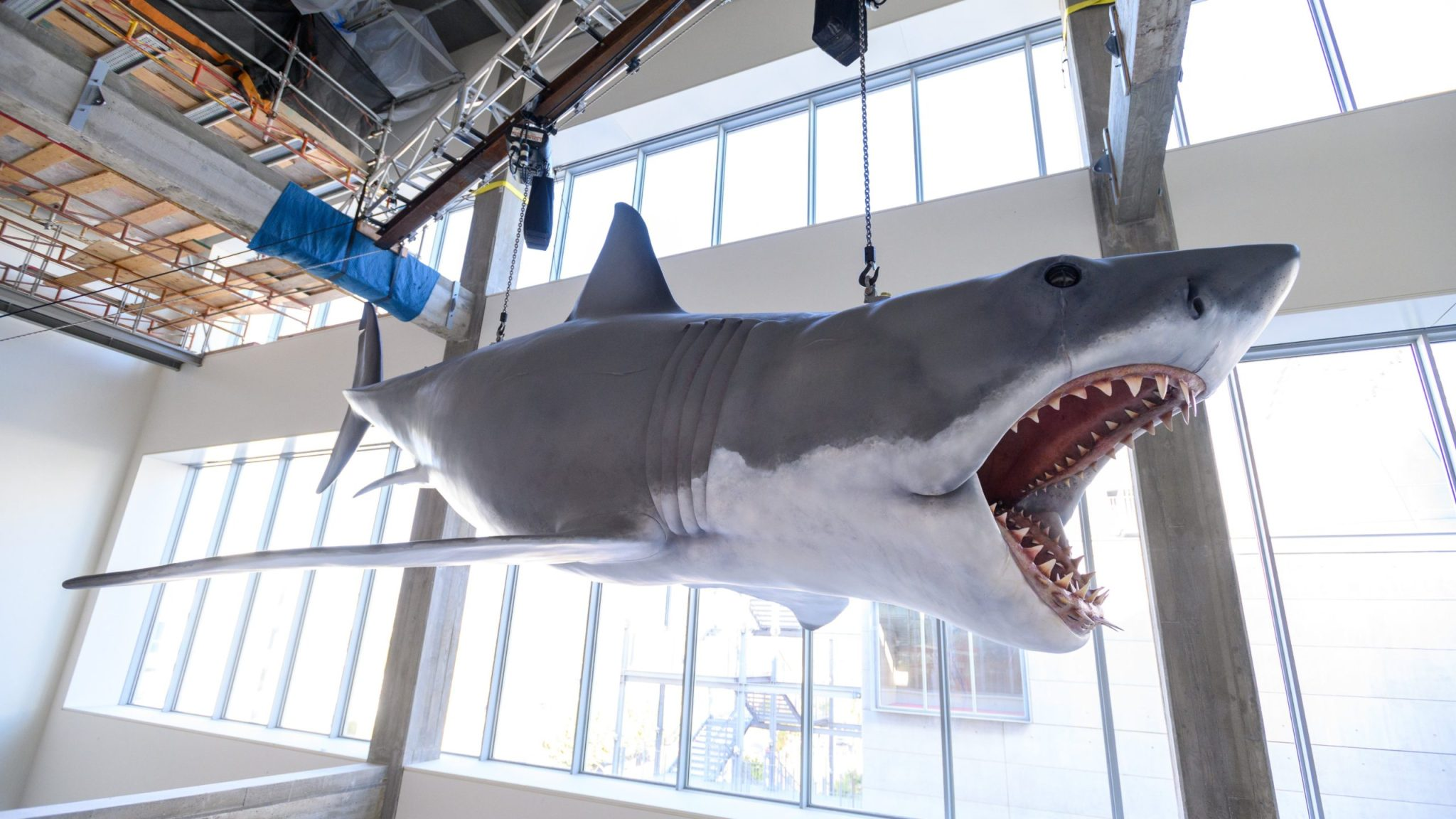 WATCH >> Academy Museum of Motion Pictures Just Installed the Only Surviving Shark Model from 'Jaws'